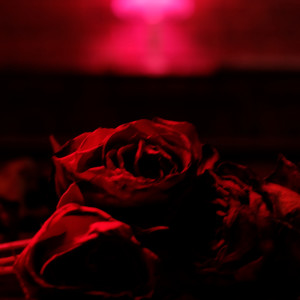 Album Roses from The Paper Kites