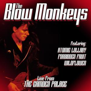 Listen to Forbidden Fruit song with lyrics from The Blow Monkeys
