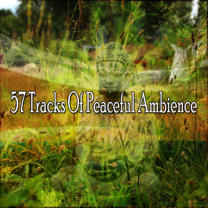 Album 57 Tracks of Peaceful Ambience from Meditation Zen Master