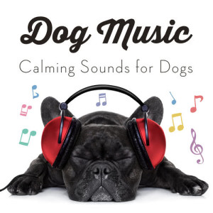 Dog Music的專輯Dog Music - Calming Songs for Dogs