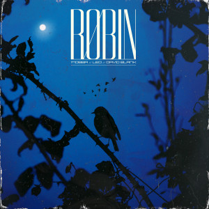 Album Robin from David Blank