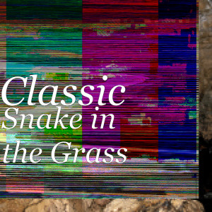 Album Snake in the Grass from Classic
