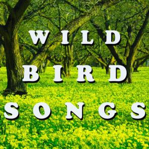 Zen Meditations from a Sleeping Buddha的專輯Bird Songs, Peaceful Background Nature Sounds