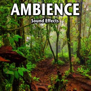Sound Ideas的專輯Ambience Sound Effects