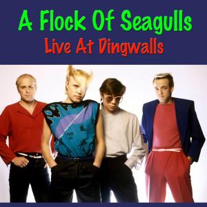 Album A Flock Of Seagulls Live At Dingwalls from A Flock Of Seagulls