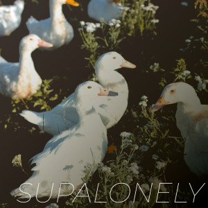 Album Supalonely (Explicit) from Vibe2Vibe