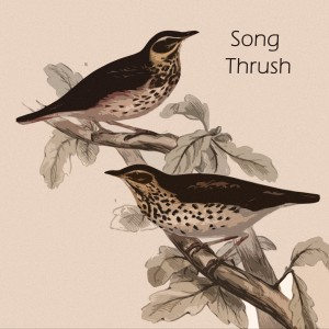The Ventures的專輯Song Thrush