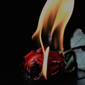 Album Hot from Hunter Rose