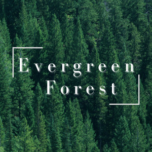 Album Evergreen Forest from Relaxing BGM Project