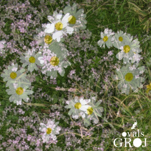 Album Ovals EP from Groj
