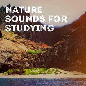 Entspannendes Klavier mit Naturklängen的專輯Nature Sounds for Studying