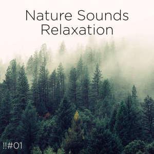 อัลบัม !!#01 Nature Sounds Relaxation ศิลปิน Nature Sounds Nature Music