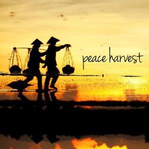 Sleep Baby Sleep的專輯Peace Harvest