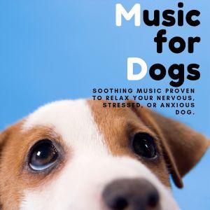 收聽Relaxing BGM Project的Chihuahua Concert歌詞歌曲