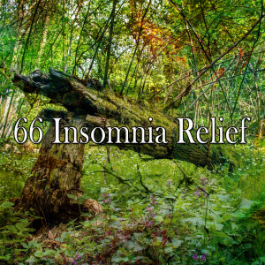 Sleep Sounds of Nature的專輯66 Insomnia Relief