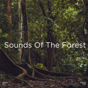 """Album !!!"""" Sounds Of The Forest """"!!! from Sleep Sound Library"""