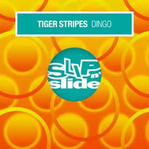 Album Dingo from Tiger Stripes