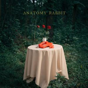 อัลบัม Past & Present ศิลปิน ANATOMY RABBIT