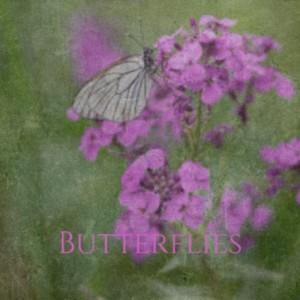 Album Butterflies from Silvio Rodríguez