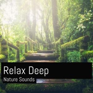 Album Relaxing Nature Sounds Birds (Sleeping Meditation) from Musica Relajante