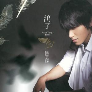 鸽子 2008 Aska Yang (杨宗纬)