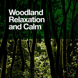 Woodland Relaxation and Calm