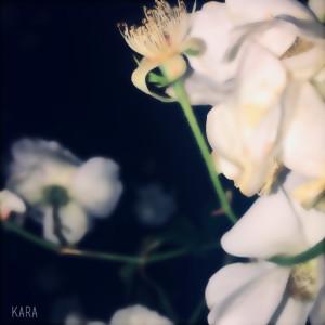 KARA的專輯Lullaby