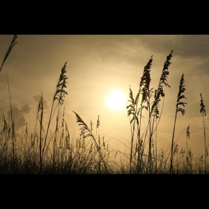 Album Calming Spiritual Melodies for Your Brain   Stress Relief Playlist from Relaxing Music Therapy