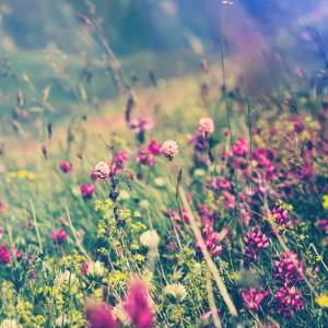 Slaapmuziek的專輯Ambient Nature Sounds