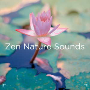 "Album !!"" Zen Nature Sounds ""!! from Deep Sleep"