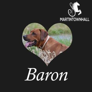 Baron dari Martin Townhall