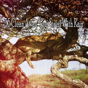 36 Clean Away Your Stress with Rain