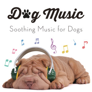 Dog Music的專輯Soothing Music for Dogs
