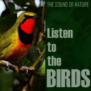 Listen to Wood Warbler song with lyrics from The Birds