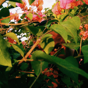 Album sakura. from Remy Baggins