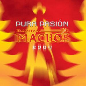 Album Pura pasión from Banda Machos