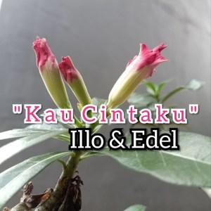 Album Kau Cintaku from Illo