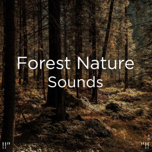 """Nature Sounds Nature Music的專輯!!"""" Forest Nature Sounds """"!!"""