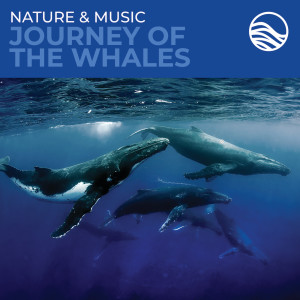 David Arkenstone的專輯Nature & Music: Journey Of The Whales