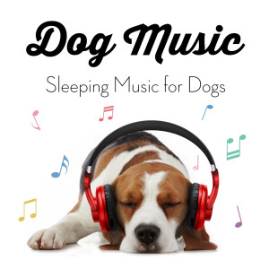 Dog Music的專輯Dog Music - Sleeping Music for Dogs