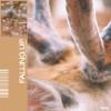 Fossa Beats Album Falling Up Mp3 Download