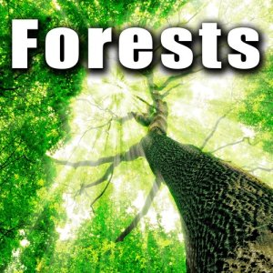 Sound Ideas的專輯Forests