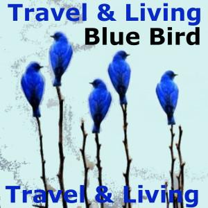 Album Blue Bird from Travel & Living