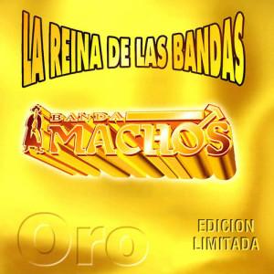 Album La reina de las bandas Vol. II from Banda Machos