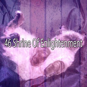 Album 46 Shrine of Enlightenment from White Noise Babies