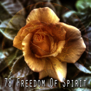 Album 78 Freedom of Spirit from White Noise Babies