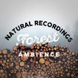 Natural Recordings: Forest Ambience