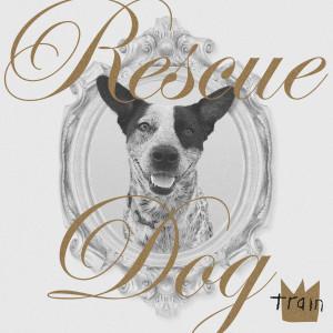 Rescue Dog dari Train