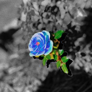Album Blue Rose from SoMo