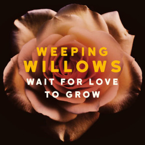 Album Wait for Love to Grow from Weeping Willows